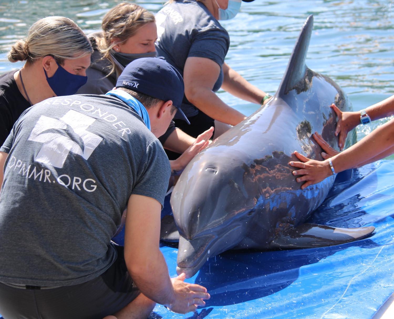 Our dolphins have a better quality of life because of people like you!